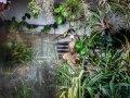 Dzsungelművészet