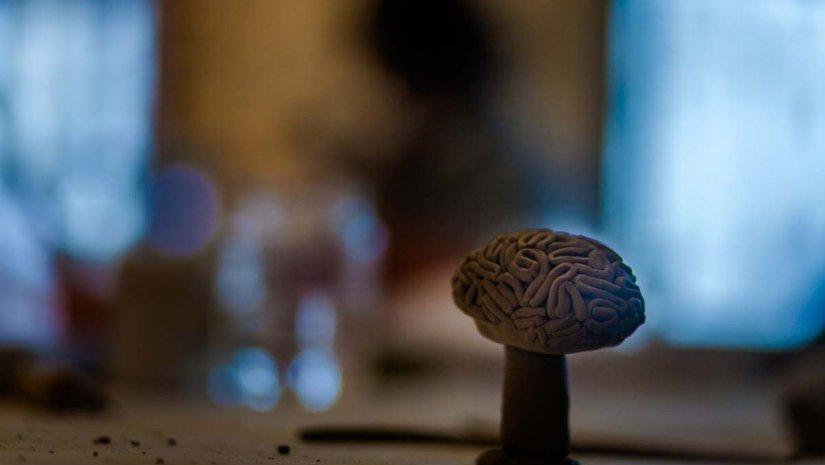 Az agy megismerésének hete