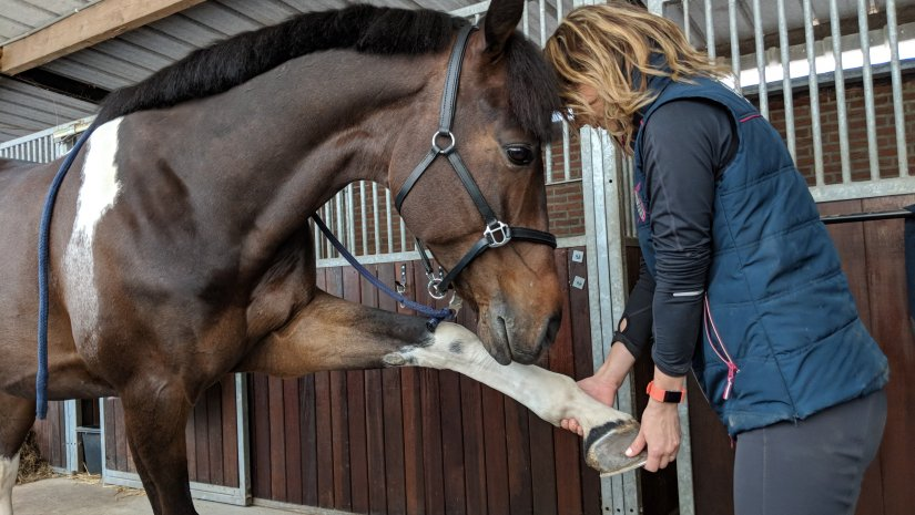 """""""A lovak az életem"""""""