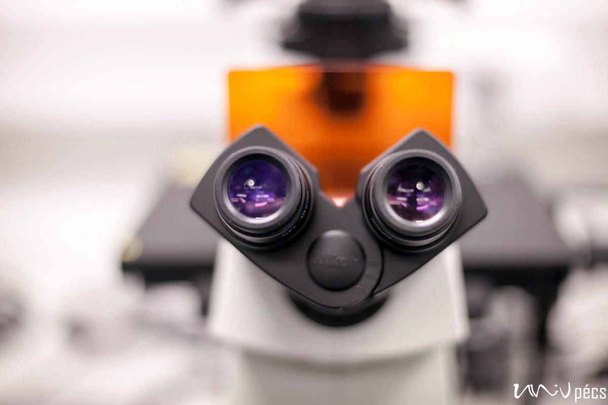 Szúnyogok és kullancsok által terjesztett vírusokat is kutatnak a PTE virológusai