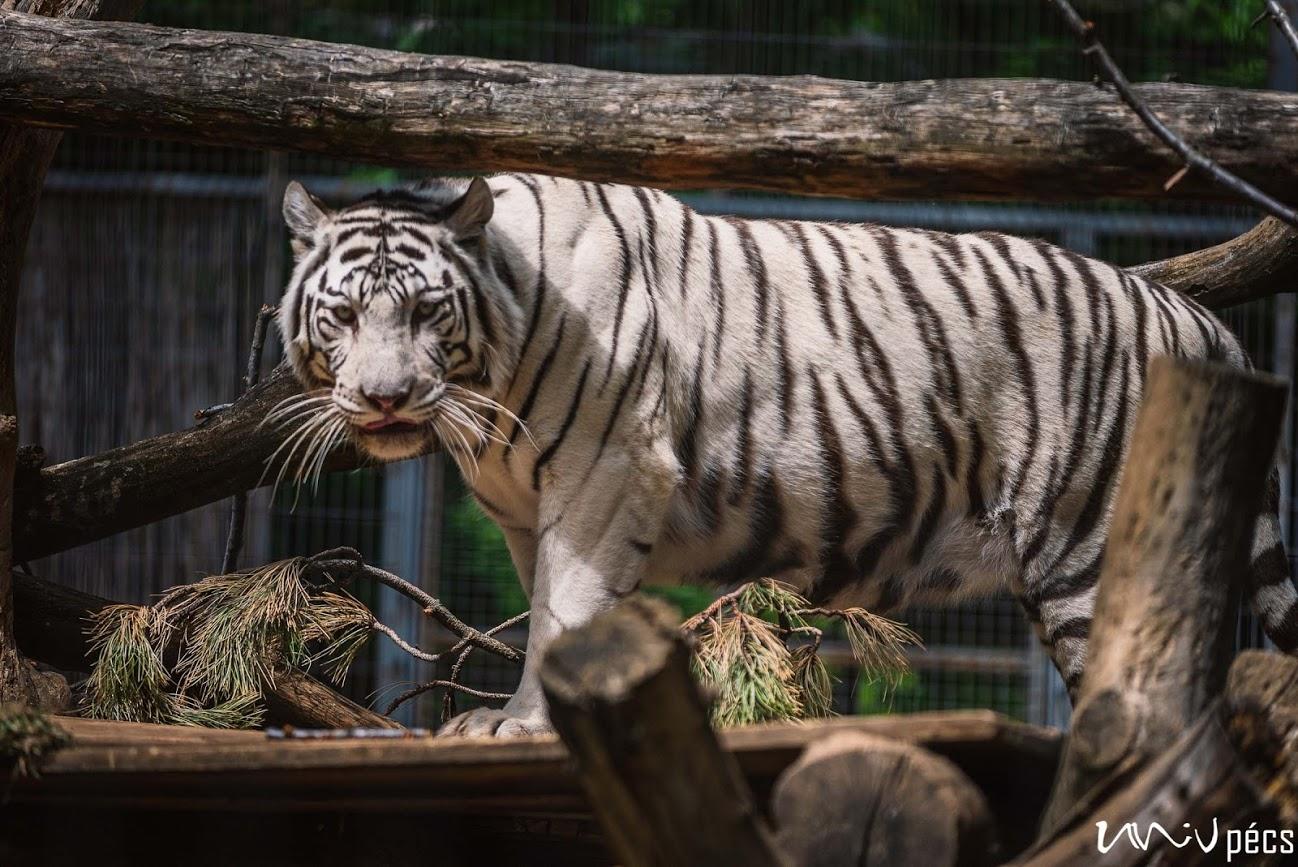 60 éves a Pécsi Állatkert