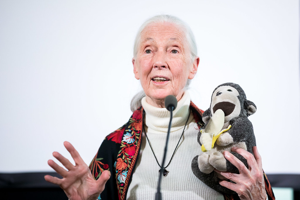 Jane Goodall üzenete